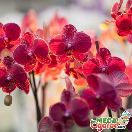 Биологическое строение орхидеи