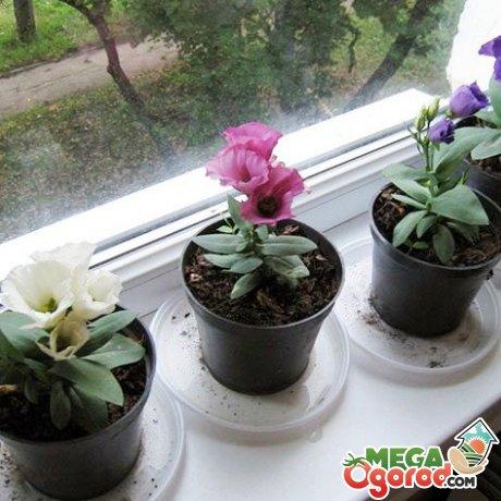 Условия для содержания растения