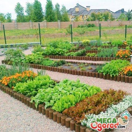 Правильная организация севооборота на огороде