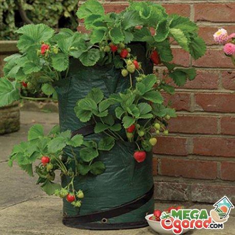 Уход за ягодным растением