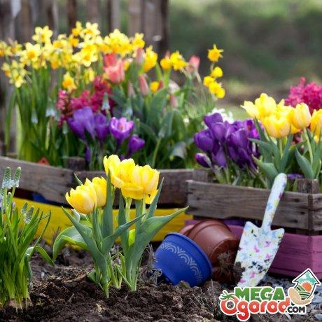 Выбираем цветы для весны