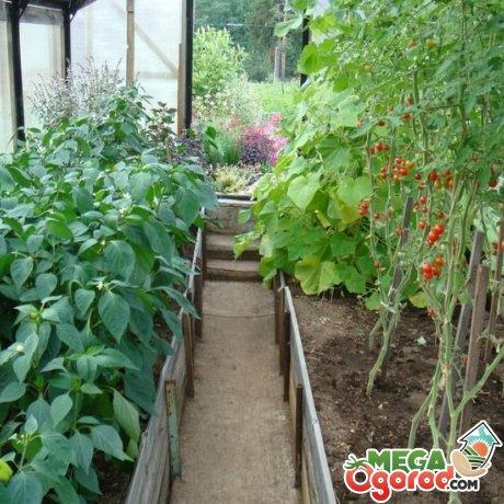 Весенне-летние посевы