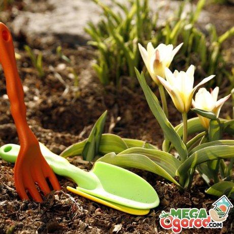 Основные работы весной в саду