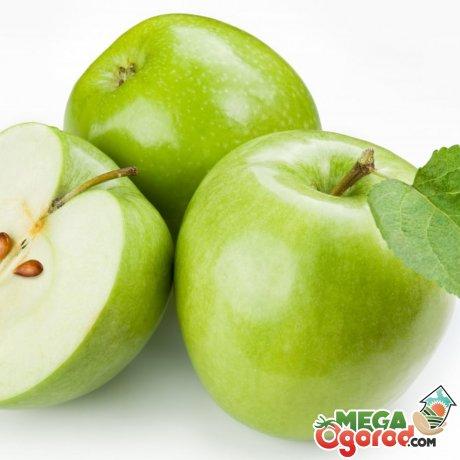 Яблоня сорт с зелеными плодами