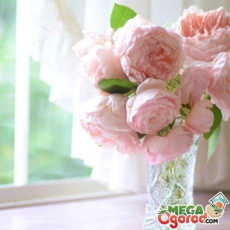 Местоположение букета пионов или изображения цветка в доме по фен-шуй