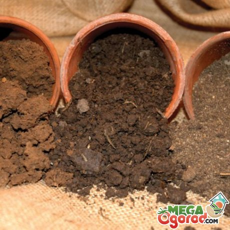 Почва и емкость для декоративного кустарника