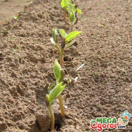 Сроки и правила посадки семян в грунт