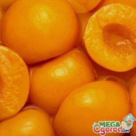 Полезные свойства абрикоса ананасного