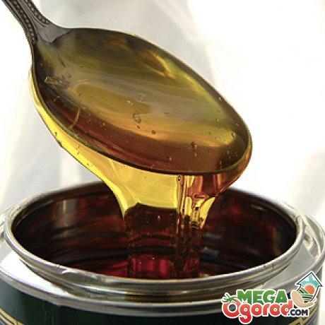 Рецепты на основе агавы