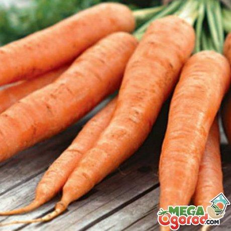 Среднеспелые сорта моркови