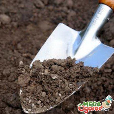 Подготовка почвы для салата