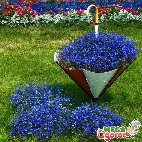 Лобелия ампельная: описание, сорта, выращивание из семян и уход за растением