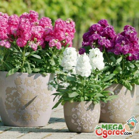 Условия для выращивания и советы по уходу