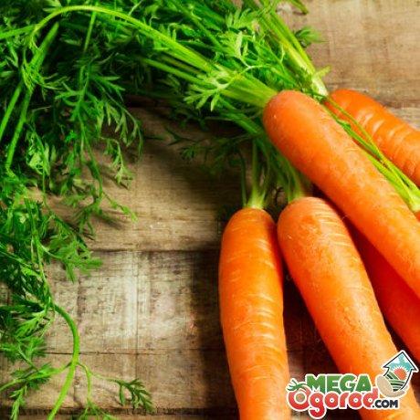 Позднеспелые семена моркови