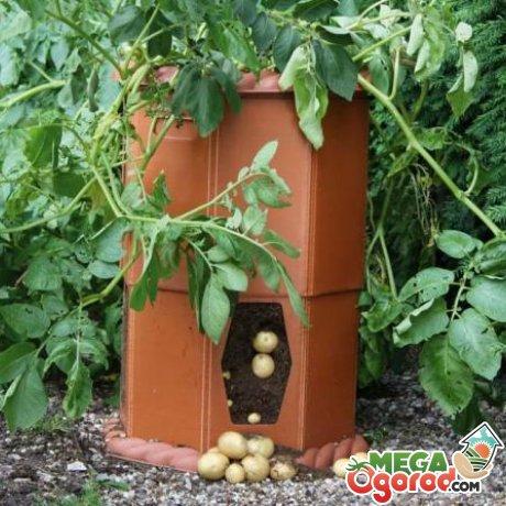 Самые лучшие методы выращивания большого урожая картофеля