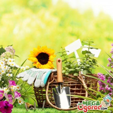 Правила ухода за низкорослыми цветами