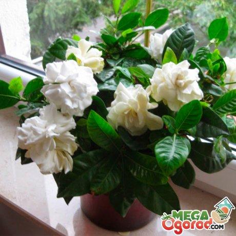 Создание условий для выращивания комнатного растения