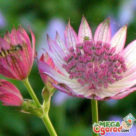 Болезни и вредители садового растения, как с ними бороться