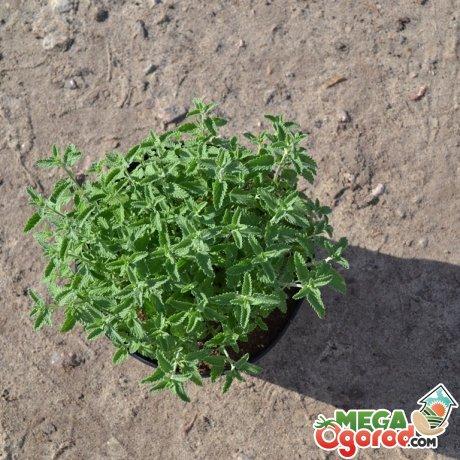 Правила посадки растения