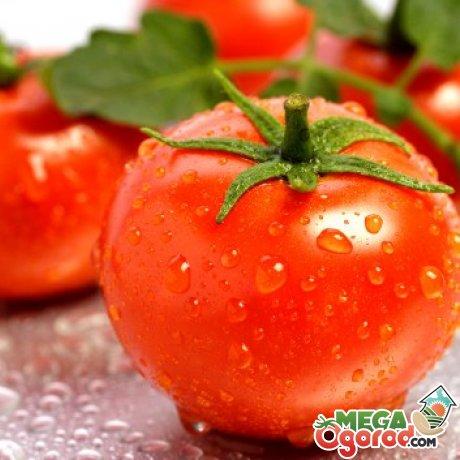 Какие сорта помидоров подойдут для выращивания в бочке