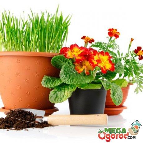 В неблагоприятные дни пересаживать растения запрещено