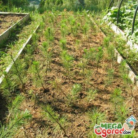 Посев семян и уход за сеянцами