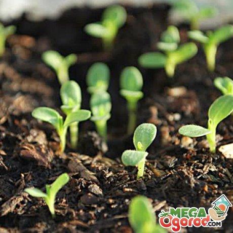 Подготовка почвы и семян