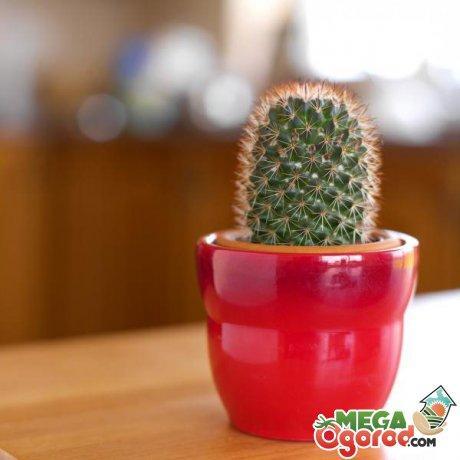 Условия выращивания и советы по уходу