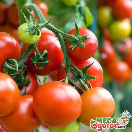 Какие овощи любят кислую почву?