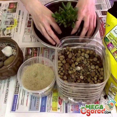 Подготовка емкости и почвы к пересадке
