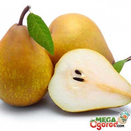 Калорийность, пищевая ценность фрукта