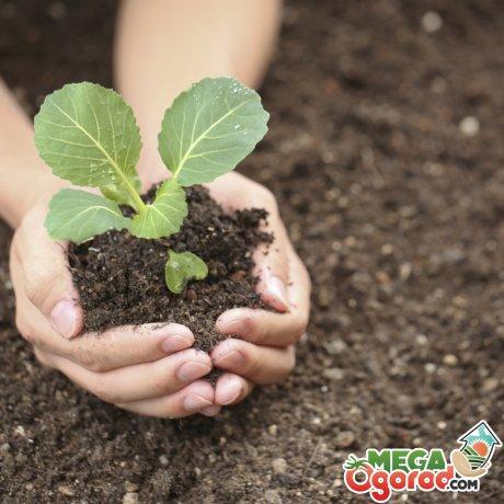Сроки и правила посадки сеянцев в грунт