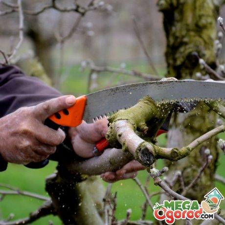 Обрезка и подготовка яблони к зиме