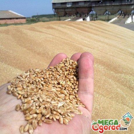 Правила обработки зерновых