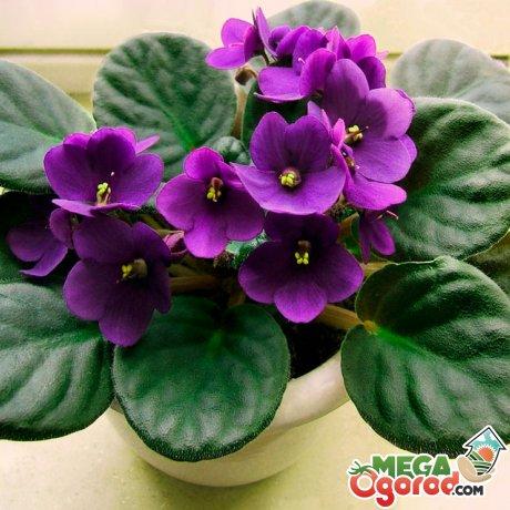 Как часто надо пересаживать растение?