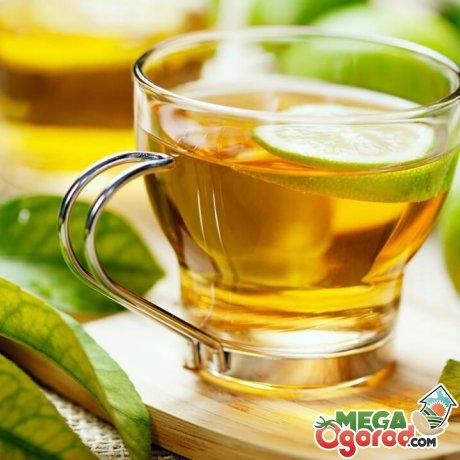 Сорта хорошего зеленого чая: посадка и уход