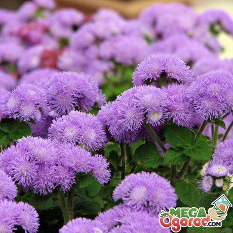 Как правильно ухаживать за декоративным растением