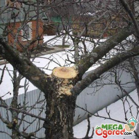 Основные правила обрезки плодовых деревьев