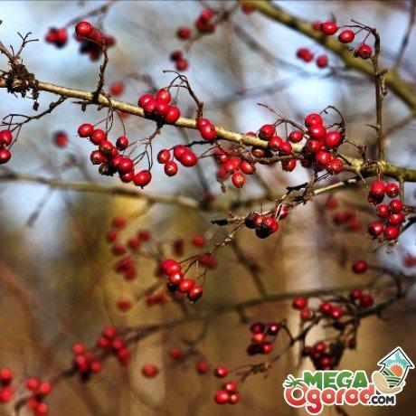 Болезни и вредители растения