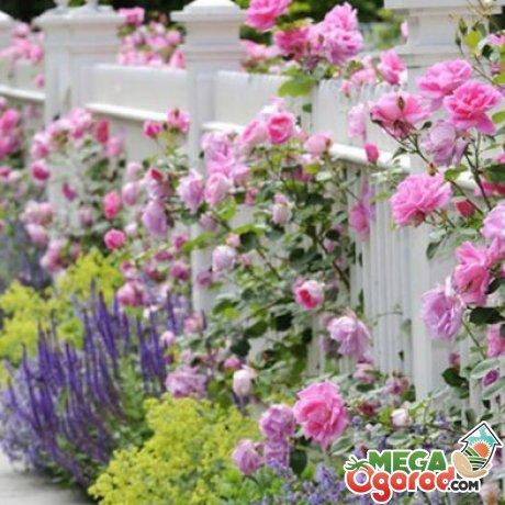 Посадка растений как в деревенских усадьбах Франции