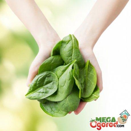 Как правильно выбрать овощ и хранить его
