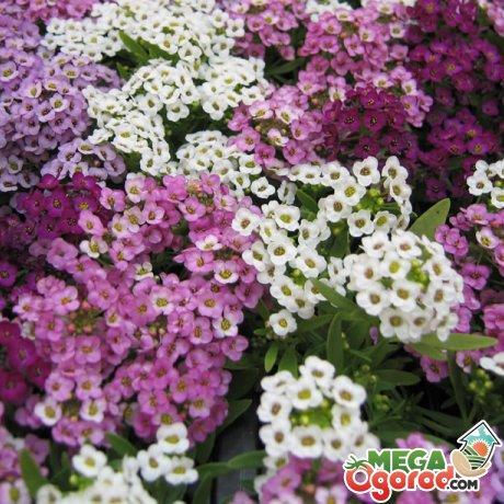 Советы по уходу за цветами