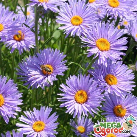 Обзор самых красивых засухоустойчивых цветов