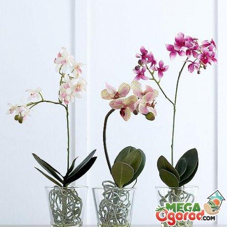 Стеклянные горшки для орхидеи