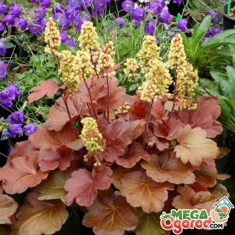 Подбор растений для ажурной тени