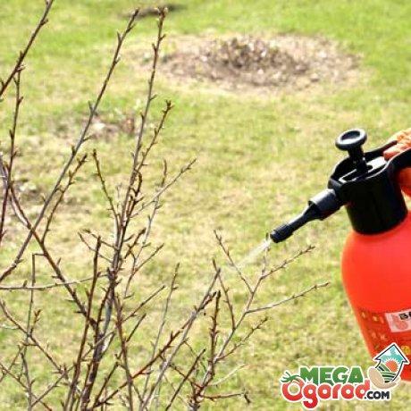 Использование для садовых деревьев