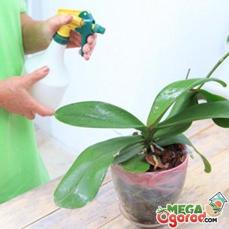 Советы по грамотному уходу за орхидеями
