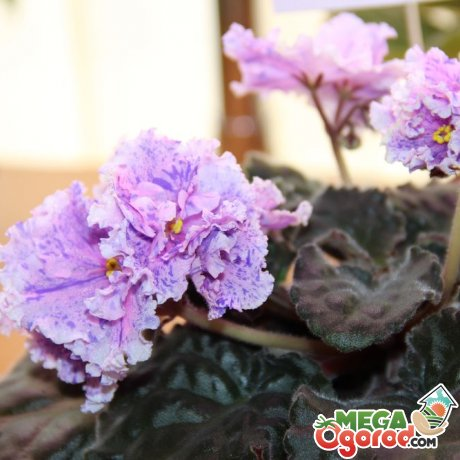 Условия выращивания цветов