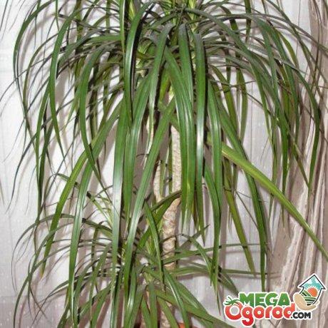Как вылечить растение?