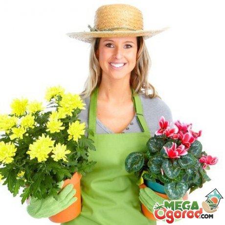Почему желтеют листья у комнатных растений: причины, методы лечение и профилактика